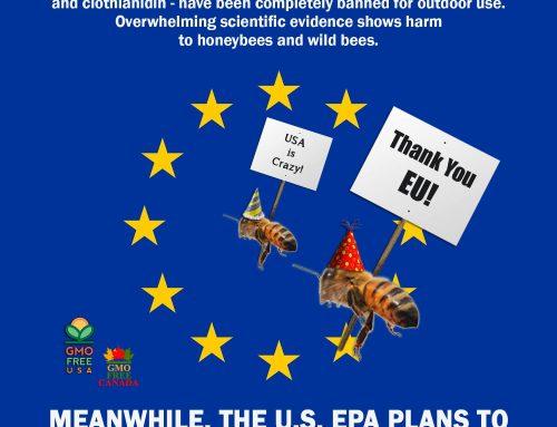 Sauvez les abeilles, les panneaux solaires… et l'Europe